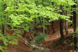 Luxe vakantievilla huren met 14 personen in Ardennen